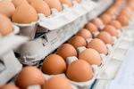 Fipronil Contamination in Eggs Update